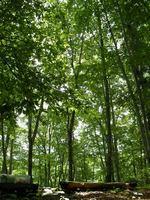 人を迎える森