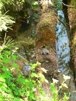 松木小屋の前にある池に目を向けると、何かがじっとしているのを発見