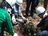 オフィスで育った実生苗を、アファンの森に植え戻しました。