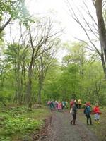 雨の森もまた楽し