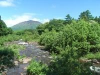 5月29日 河原のヤナギが一気に葉を茂らせました
