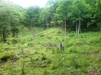 刈り払い機で草を刈っている松木