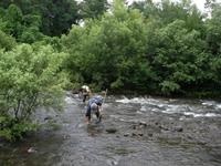 鳥居川での調査作業