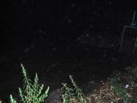 暗闇の中、増水した水が濁っています