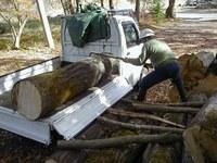 伐採した材を集める