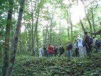 アファンの森の特徴的な場所を見て回る