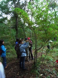 松木と共に散策。サンショウの実を味見してみました。