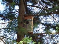 木製の巣箱