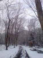 アファンの森の入口