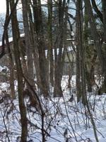 雪の林に動く影