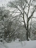 「アファンの森の物語」に登場したマザーツリー