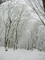 入口からお森の奥を望む