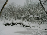 カワセミ池