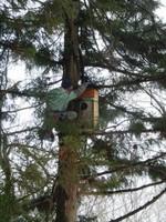 フクロウの巣箱にカメラをセット