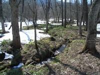きらきらと輝く小川の流れ