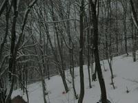 昼間なのにこんなに暗いアファンの森。雪が降り続いています。