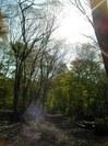 みんなが帰った後、森が喜んでいるようでした。