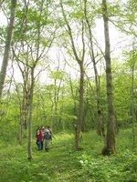松木と共にアファンの森を感じます。