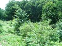 生長する木々