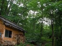 松木小屋から森の奥を見ると