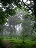 霧に包まれるアファンの森