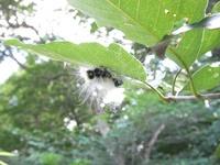 こんな毛虫を見つけて盛り上がります。