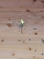 センターの壁のクモの巣 アップ