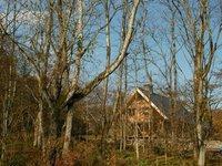 森の中から望むアファンセンター