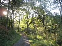 ウェールズのアファンの森