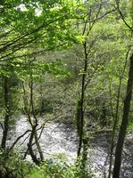 ウェールズのアファンの森に流れる沢