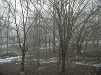 ホールのデッキから霧の森