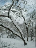 雪による倒木