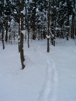 スノーシューで歩いた足跡