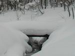 積雪は大人のひざ上ぐらい