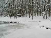弥生池に残ったシュカブラ(イタチ?の足跡)