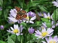 蜜をすう蝶