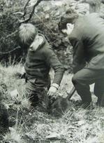 植樹する子供(アファン森林公園ビジターセンター提供)