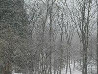 3月の雪 ①