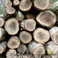森の恵み 樹から木材に
