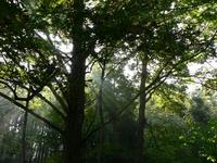 アファンの森に注ぐ光
