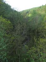 森の木々の葉もずいぶんと広がり、体の小さいムシクイ類はますます観察はしにくくなり始めています。
