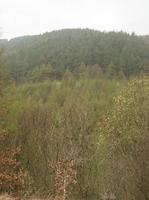 春の緑をまとうウェールズ・アファンの森