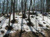 北向きの斜面に残る雪