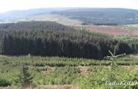 針葉樹が植林されたウェールズ・アファンの風景