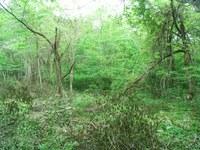 低灌木とツル絡まった木々
