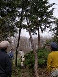 引き起こしたところに支え木をかます(撮影:池田恭久)