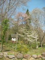 ゲストハウスそばに咲くヤマザクラやコブシ