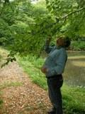 ヤマザクラの枝先を見るニコル