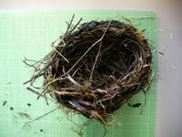 ヒヨ吉さんが拾った鳥の巣
