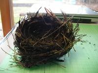 ヒヨ吉さんが拾った鳥の巣3